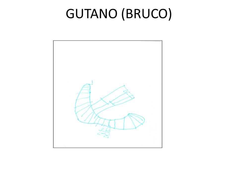 GUTANO (BRUCO)