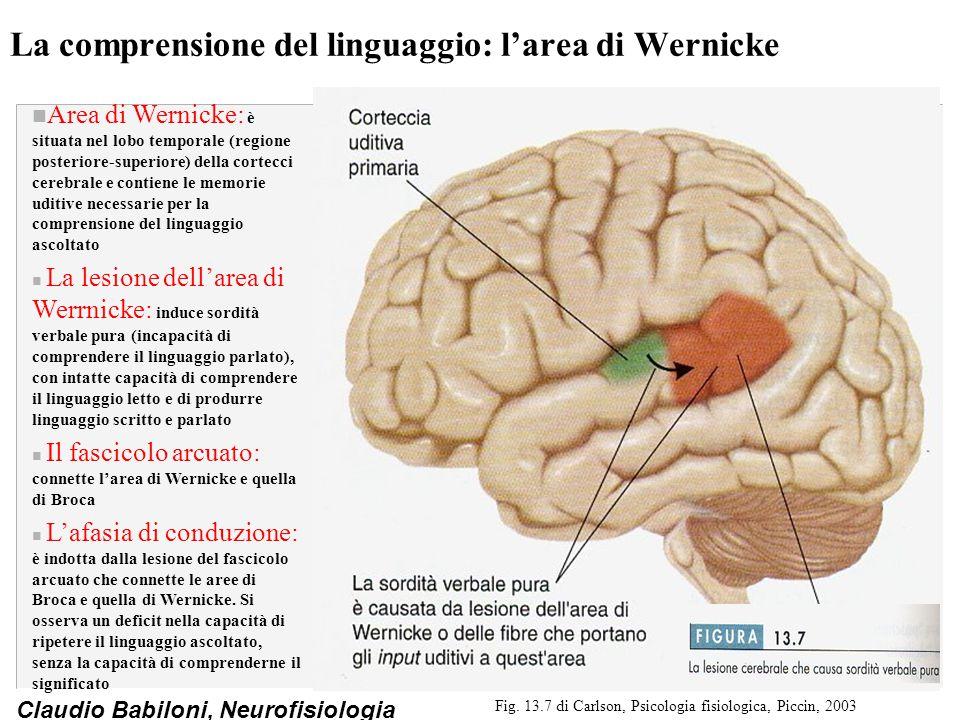 La comprensione del linguaggio: l'area di Wernicke
