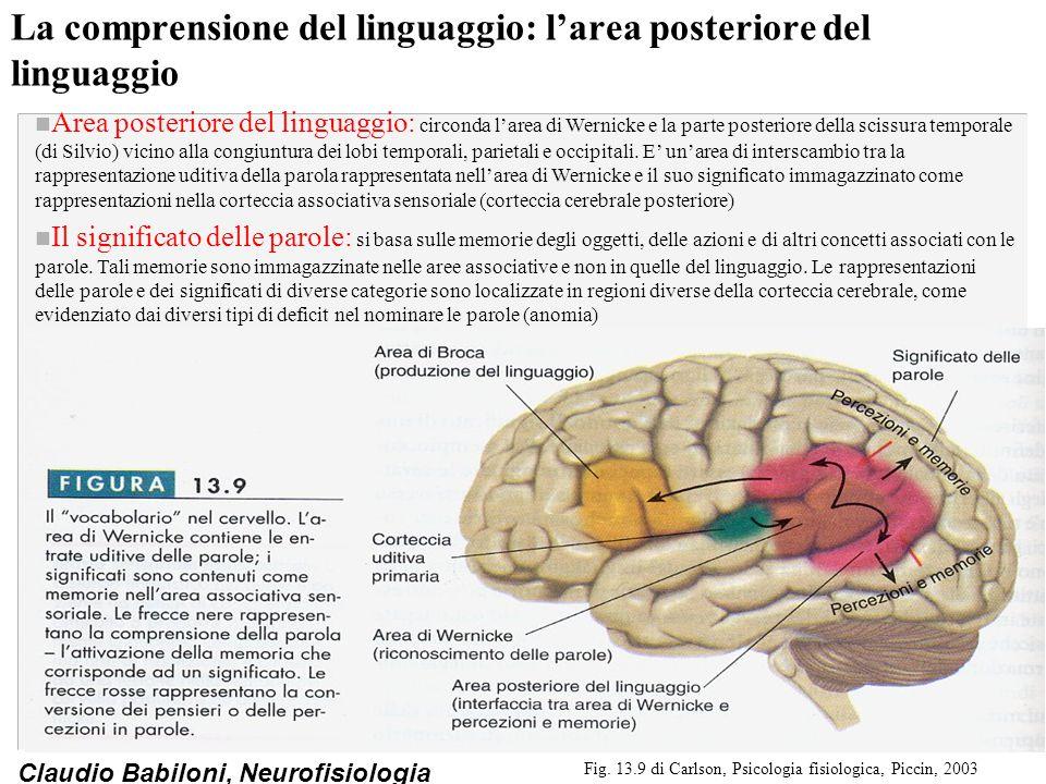 La comprensione del linguaggio: l'area posteriore del linguaggio