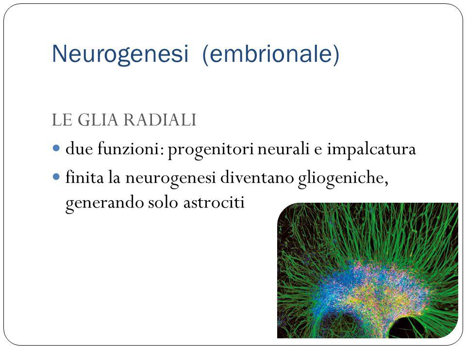 Neurogenesi (embrionale)