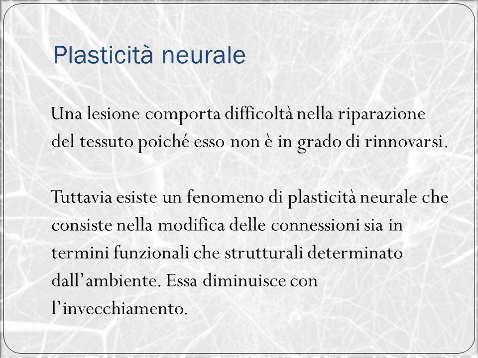 Plasticità neurale