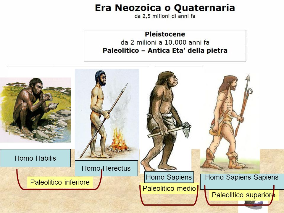 Homo Habilis Homo Herectus. Homo Sapiens. Homo Sapiens Sapiens. Paleolitico inferiore. Paleolitico medio.