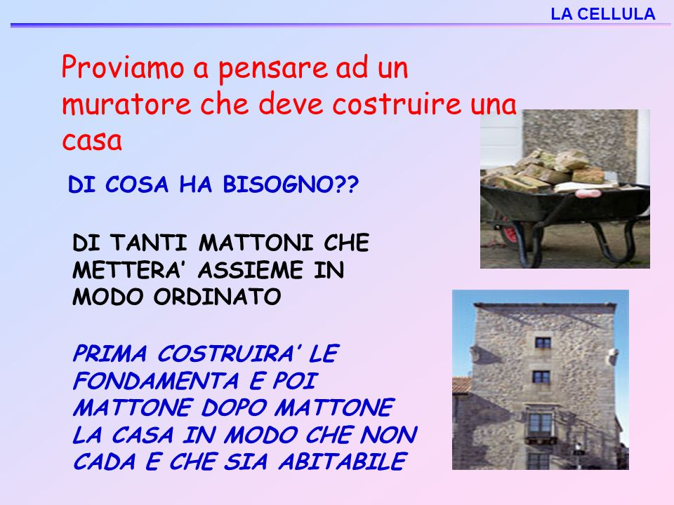 La cellula ppt video online scaricare for Costruire la mia casa online gratuitamente