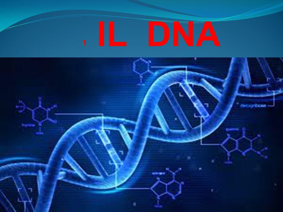 1 IL DNA