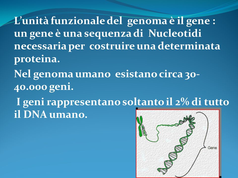 L'unità funzionale del genoma è il gene : un gene è una sequenza di Nucleotidi necessaria per costruire una determinata proteina.