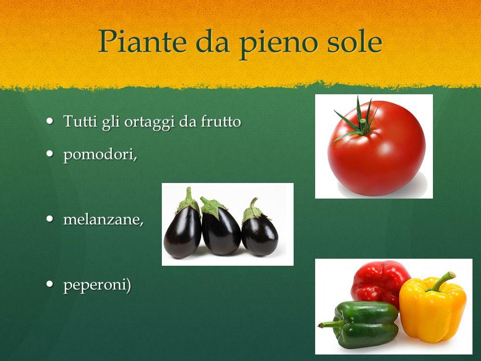 Piante da pieno sole Tutti gli ortaggi da frutto pomodori, melanzane,