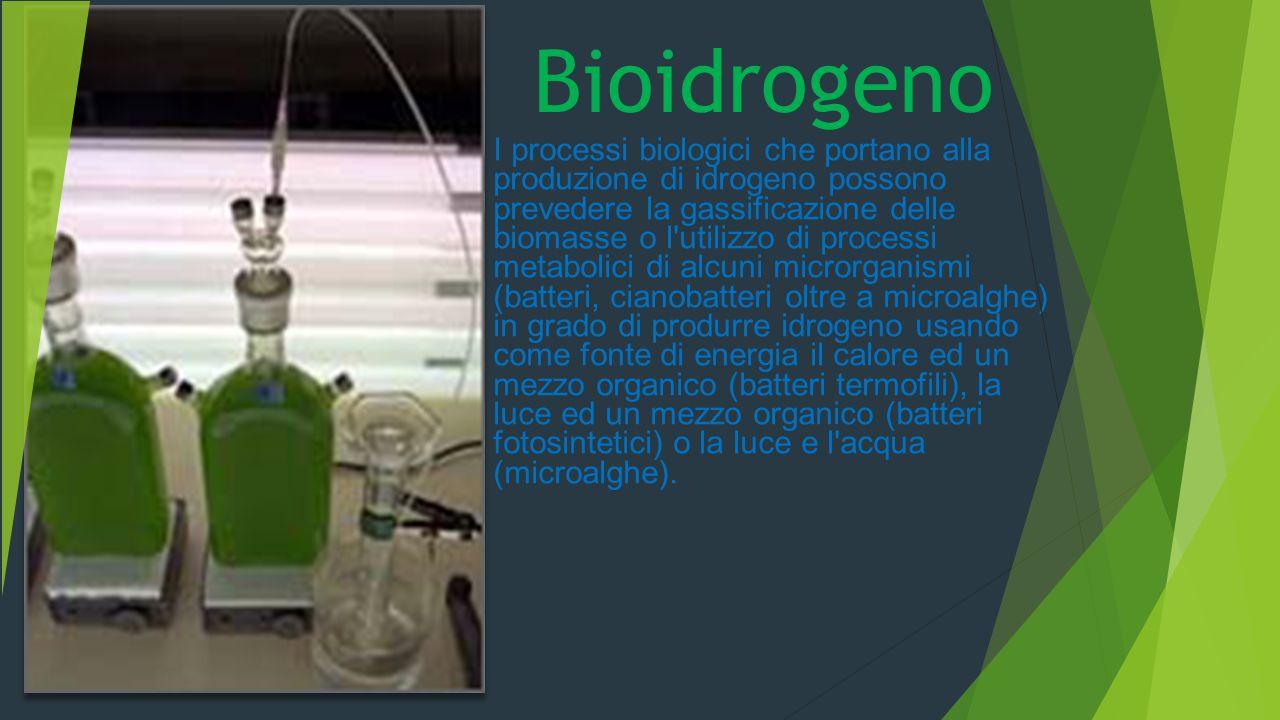Bioidrogeno