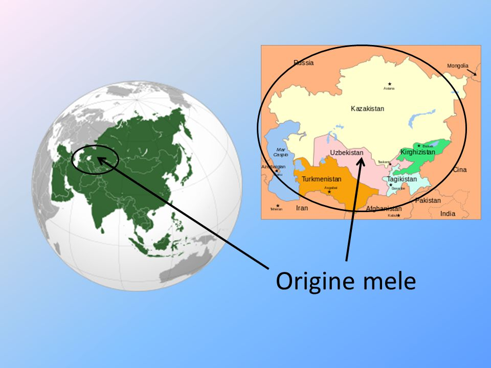 Origine mele