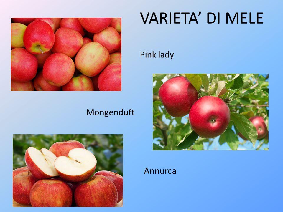 VARIETA' DI MELE Pink lady Mongenduft Annurca