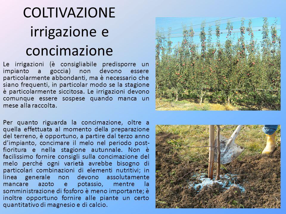 COLTIVAZIONE irrigazione e concimazione