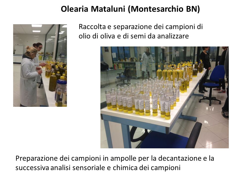 Olearia Mataluni (Montesarchio BN)