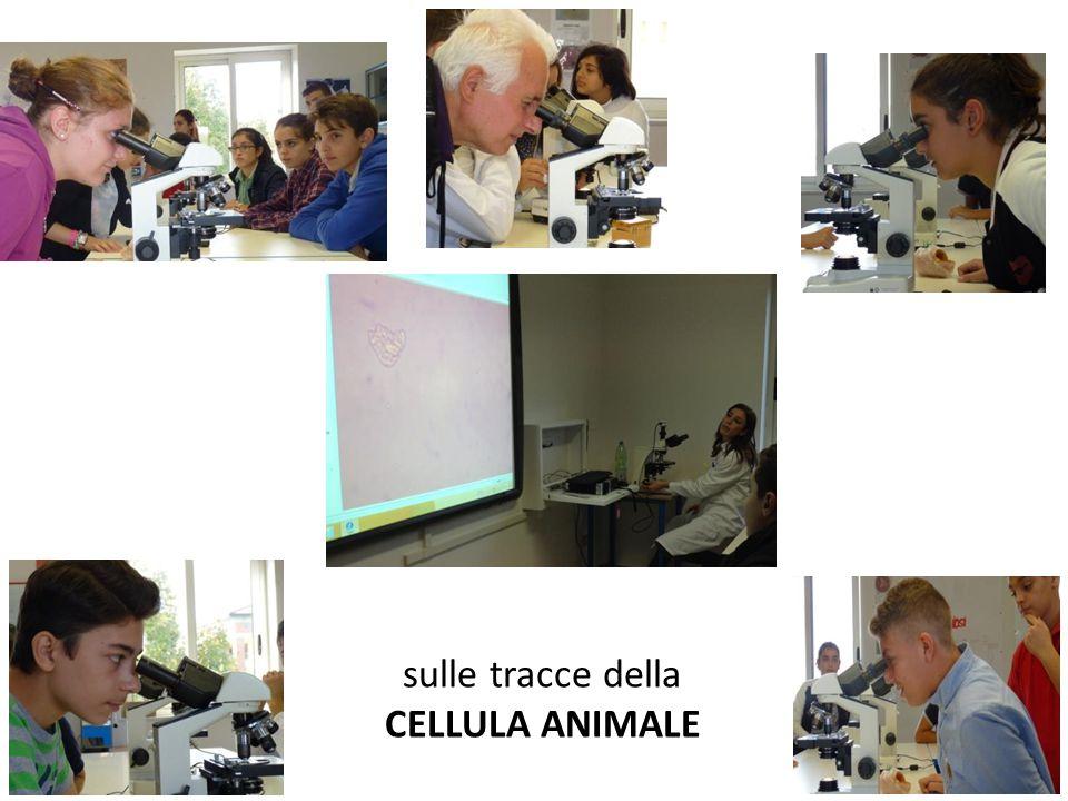 sulle tracce della CELLULA ANIMALE