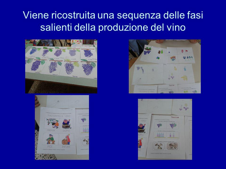 Viene ricostruita una sequenza delle fasi salienti della produzione del vino