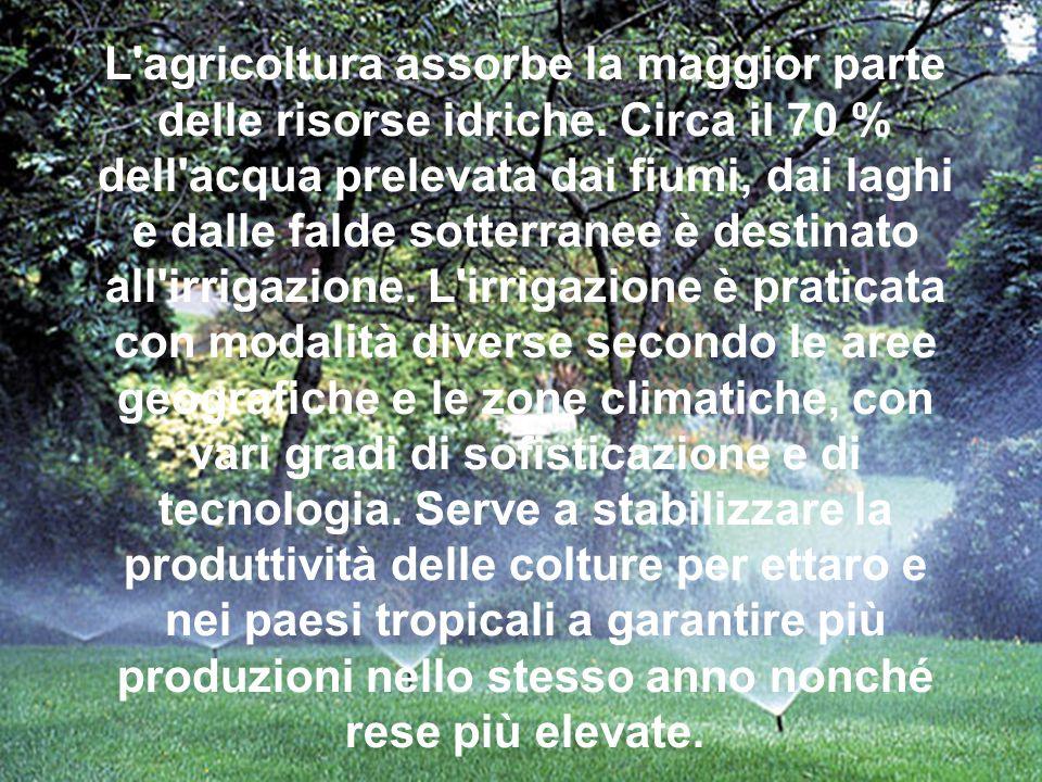 L agricoltura assorbe la maggior parte delle risorse idriche