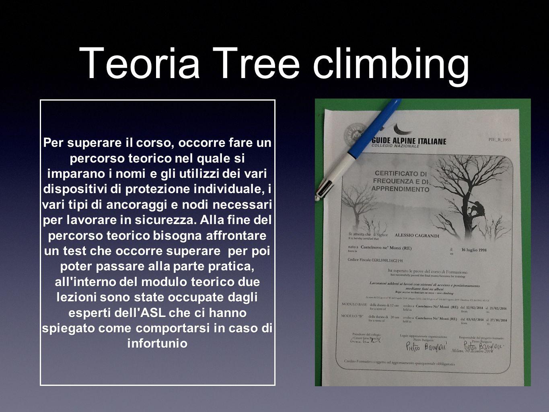 Teoria Tree climbing