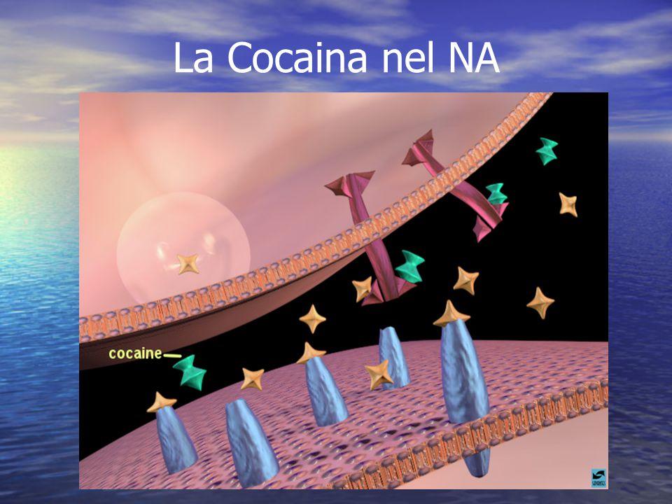 La Cocaina nel NA