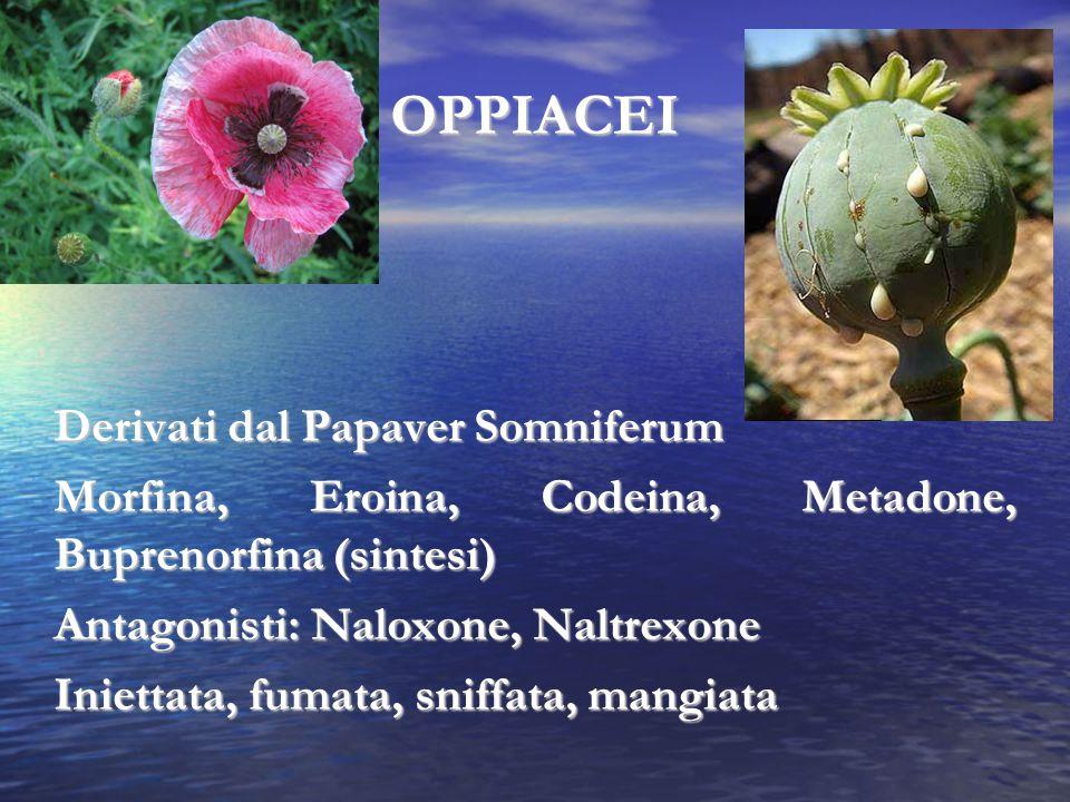 OPPIACEI Derivati dal Papaver Somniferum