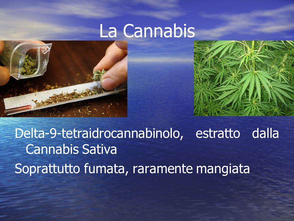 La Cannabis Delta-9-tetraidrocannabinolo, estratto dalla Cannabis Sativa. Soprattutto fumata, raramente mangiata.