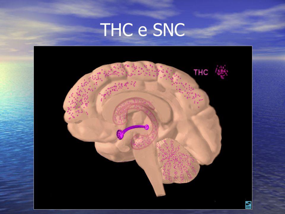 THC e SNC