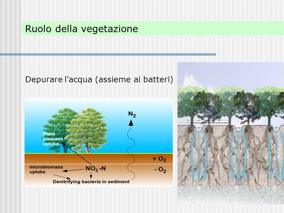 Ruolo della vegetazione