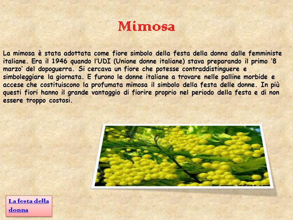 Mimosa La festa della donna
