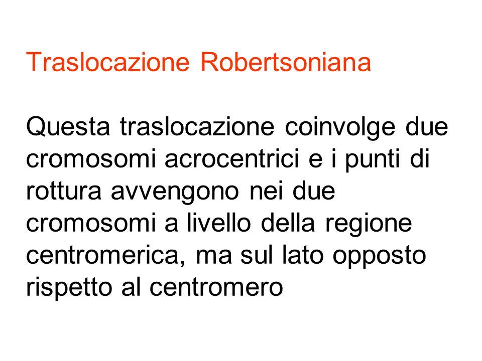 Traslocazione Robertsoniana Questa traslocazione coinvolge due cromosomi acrocentrici e i punti di rottura avvengono nei due cromosomi a livello della regione centromerica, ma sul lato opposto rispetto al centromero