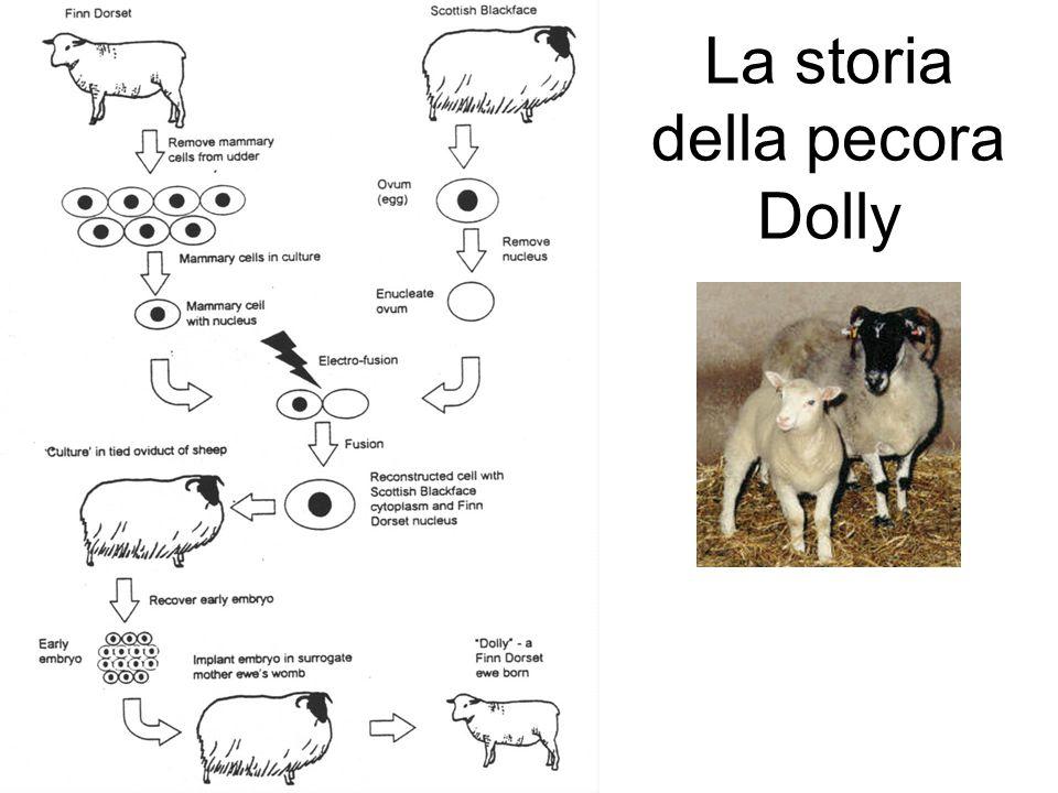 La storia della pecora Dolly