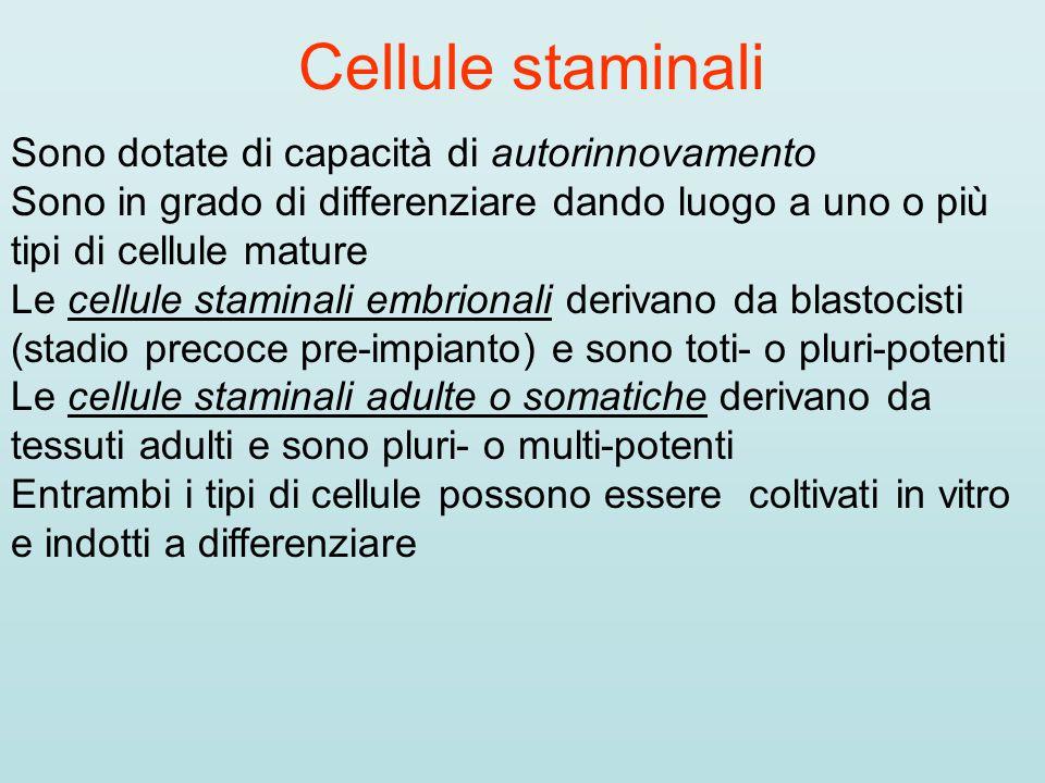 Cellule staminali Sono dotate di capacità di autorinnovamento