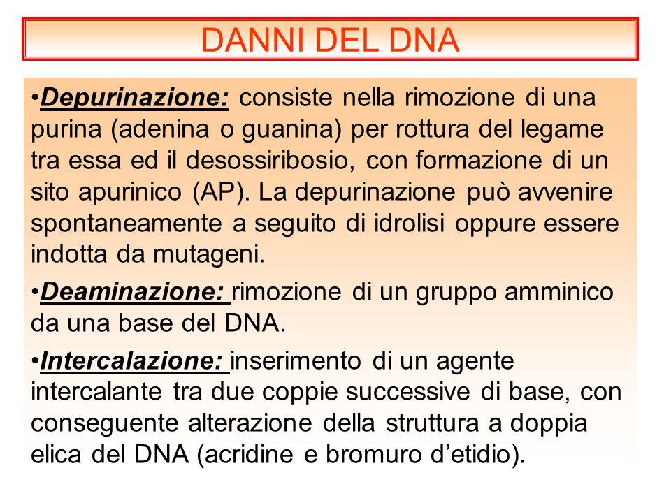 DANNI DEL DNA