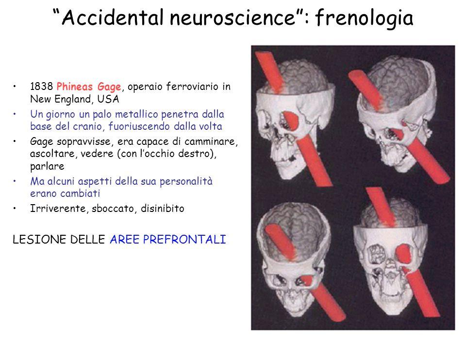 Accidental neuroscience : frenologia