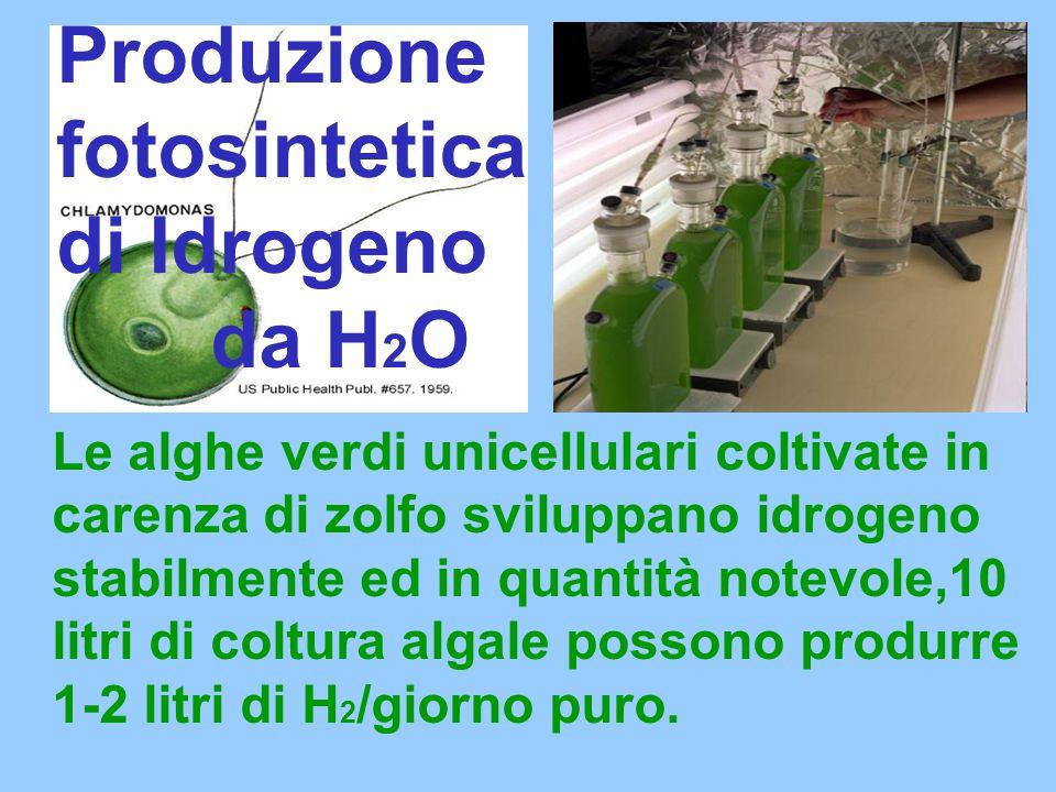 Produzione fotosintetica di Idrogeno da H2O