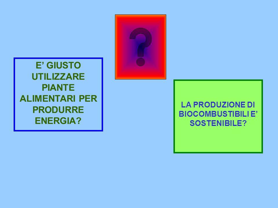 E' GIUSTO UTILIZZARE PIANTE ALIMENTARI PER PRODURRE ENERGIA