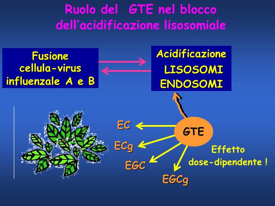 Ruolo del GTE nel blocco dell'acidificazione lisosomiale