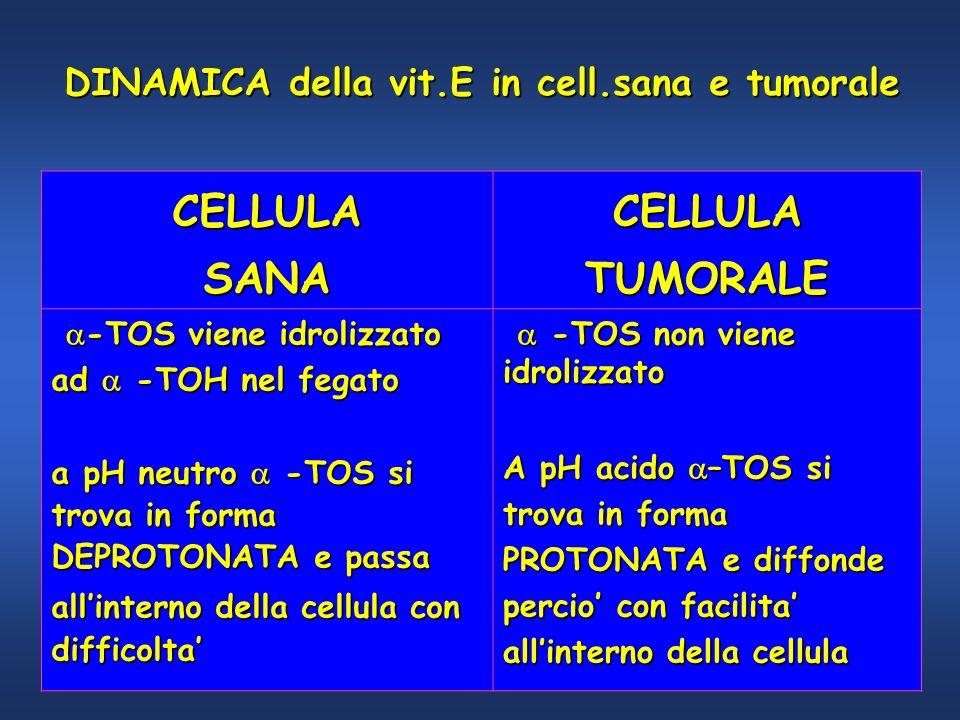CELLULA SANA TUMORALE DINAMICA della vit.E in cell.sana e tumorale