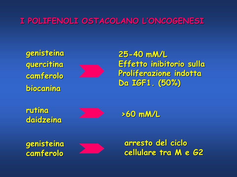 I POLIFENOLI OSTACOLANO L'ONCOGENESI