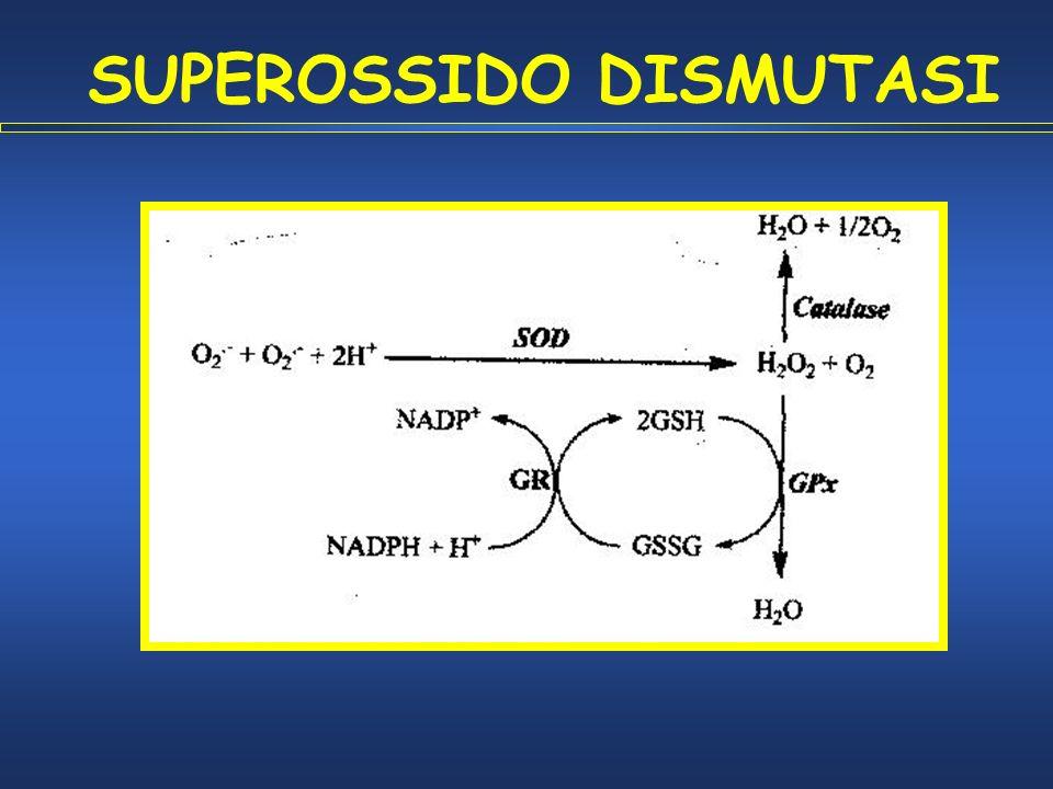 SUPEROSSIDO DISMUTASI