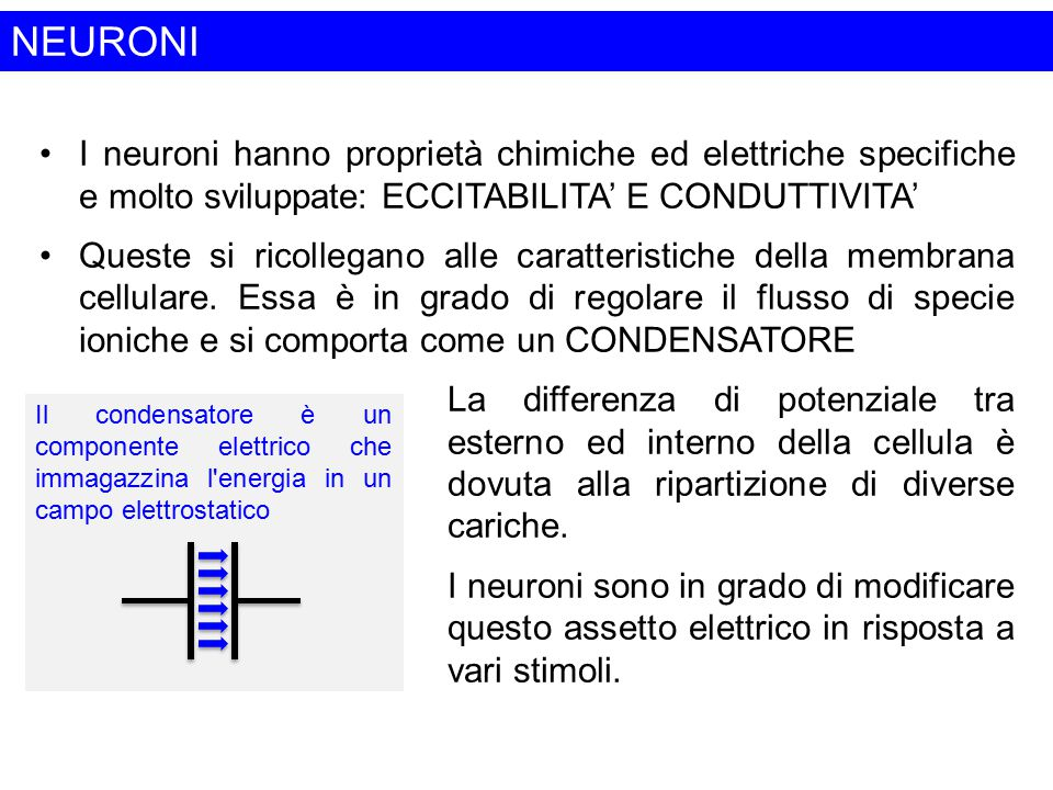 NEURONI I neuroni hanno proprietà chimiche ed elettriche specifiche e molto sviluppate: ECCITABILITA' E CONDUTTIVITA'