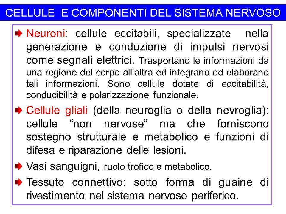 CELLULE E COMPONENTI DEL SISTEMA NERVOSO