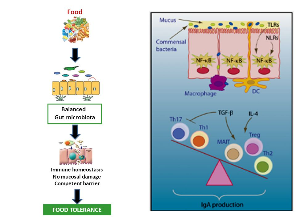 Food Balanced Gut microbiota FOOD TOLERANCE Immune homeostasis