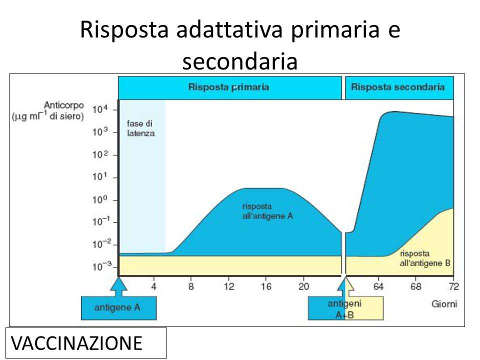 Risposta adattativa primaria e secondaria