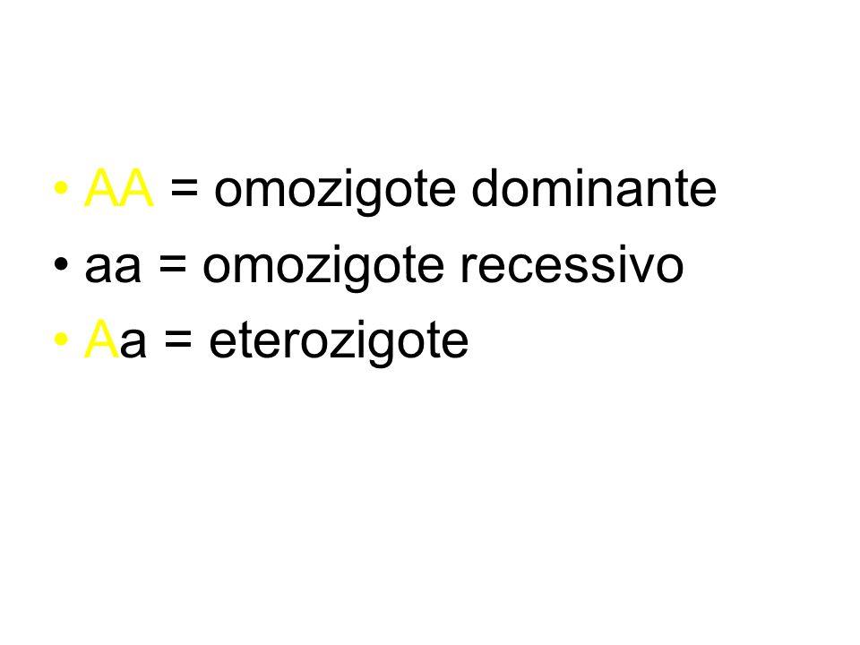 AA = omozigote dominante