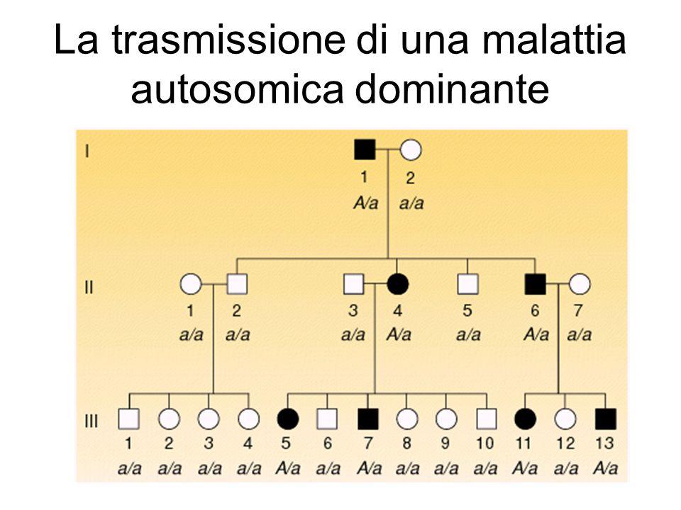 La trasmissione di una malattia autosomica dominante