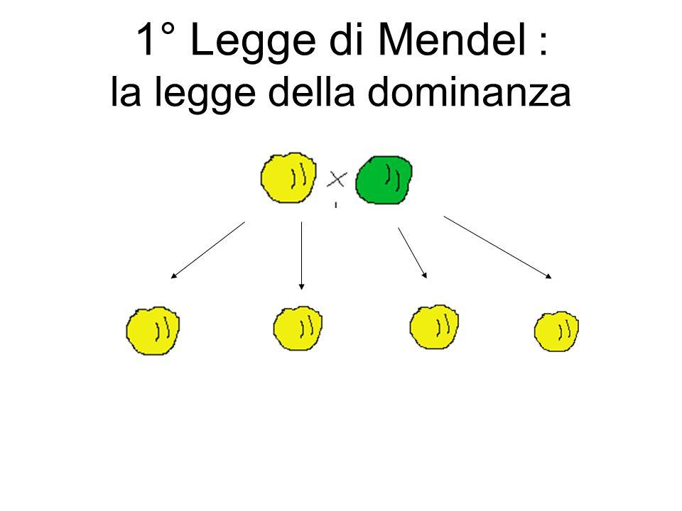 1° Legge di Mendel : la legge della dominanza