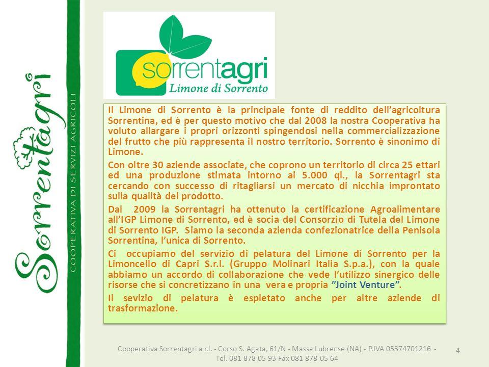 Il Limone di Sorrento è la principale fonte di reddito dell'agricoltura Sorrentina, ed è per questo motivo che dal 2008 la nostra Cooperativa ha voluto allargare i propri orizzonti spingendosi nella commercializzazione del frutto che più rappresenta il nostro territorio. Sorrento è sinonimo di Limone.