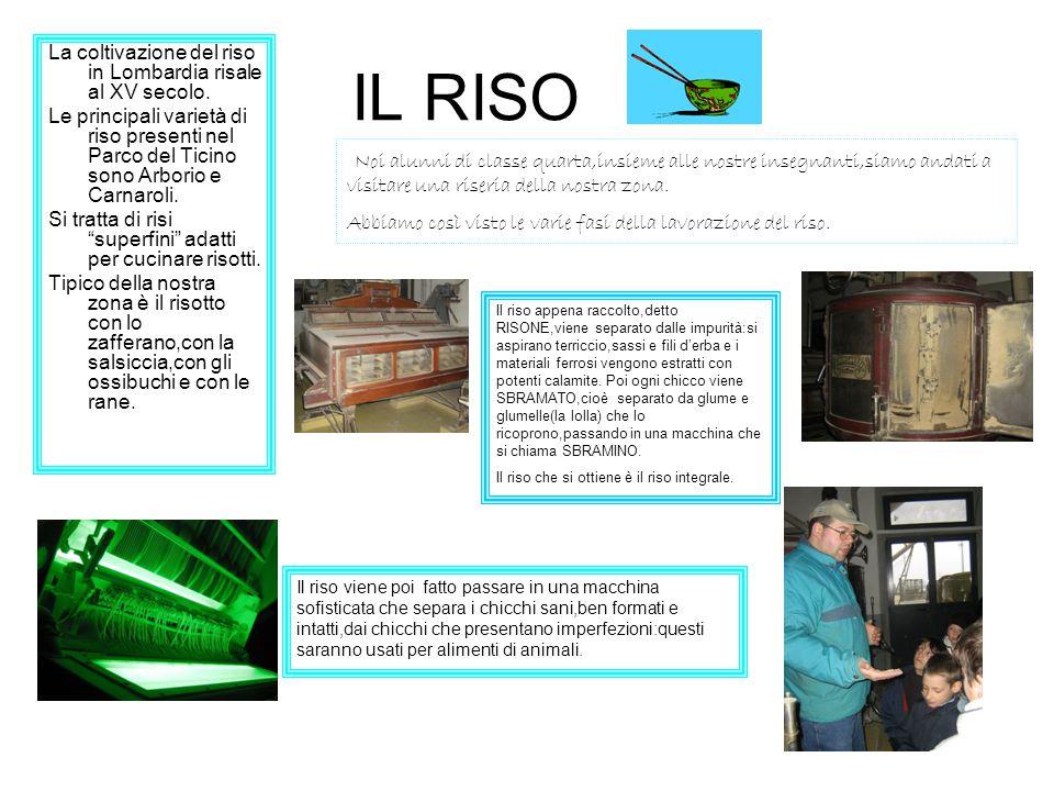 IL RISO La coltivazione del riso in Lombardia risale al XV secolo.