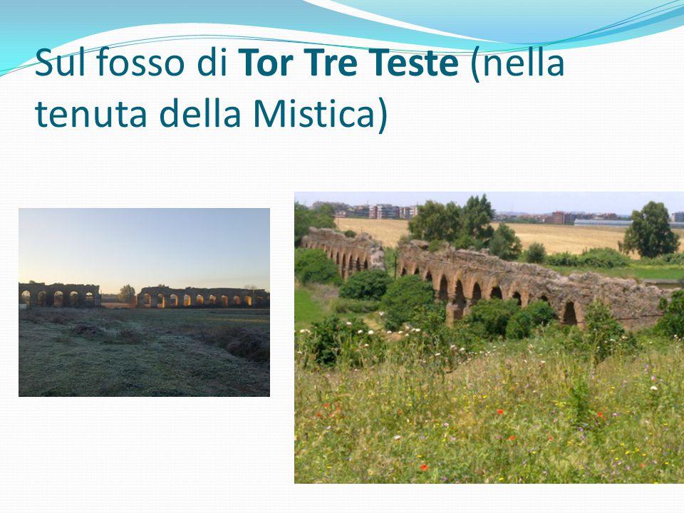 Sul fosso di Tor Tre Teste (nella tenuta della Mistica)
