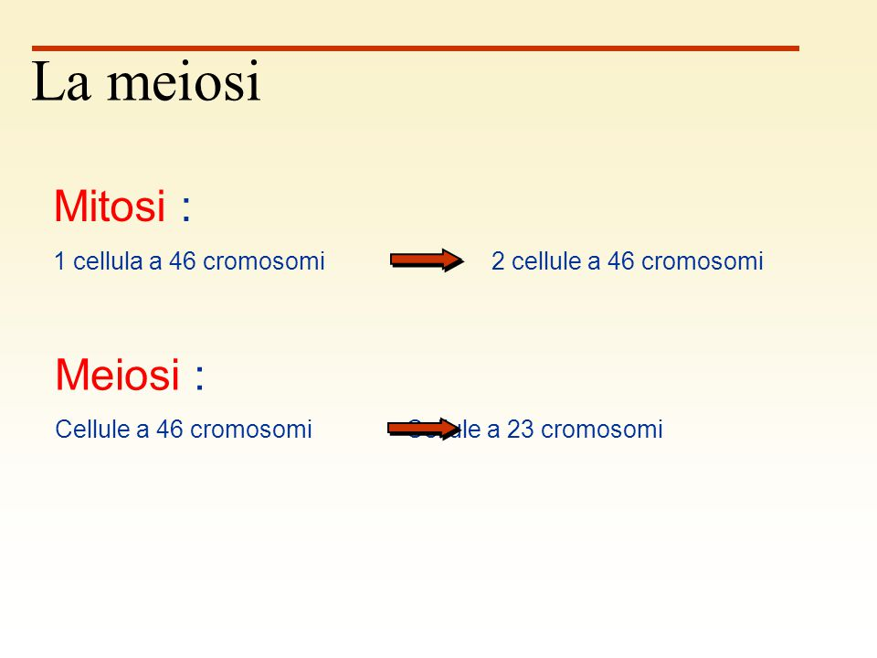 La meiosi Mitosi : Meiosi :