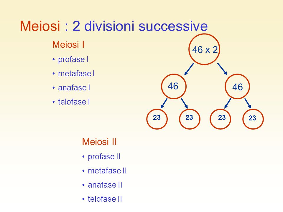 Meiosi : 2 divisioni successive