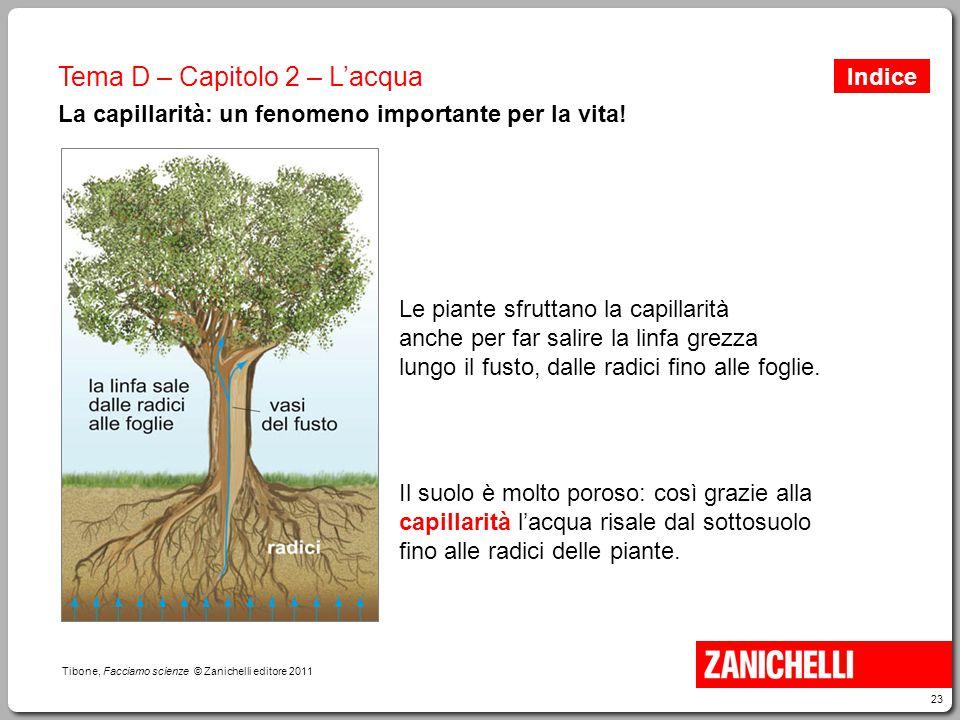 La capillarità: un fenomeno importante per la vita!