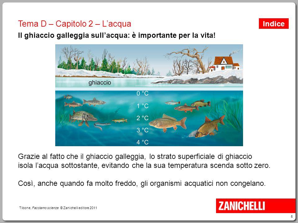 Il ghiaccio galleggia sull'acqua: è importante per la vita!